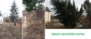 založení stavby rodinného domu kácení stromu